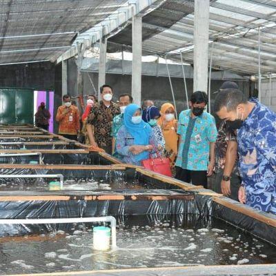 Bernilai Ekonomi Tinggi, Wagub Sumbar Kunjungi Kampung Perikanan Sidat