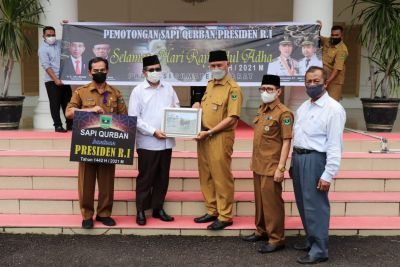 Gubernur Mahyeldi Serahkan Sapi Kurban Presiden ke Masjid Raya Sumbar