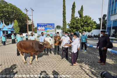 Idul Adha 1442 H, Perumda Air Minum Kota Padang Serahkan Hewan Qurban 42 Ekor Sapi dan 30 Kambing