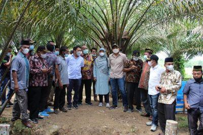 Pesisir Selatan Jadi Daerah Prioritas Peremajaan Sawit Rakyat (PSR)